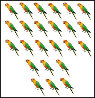 The image of some parrots