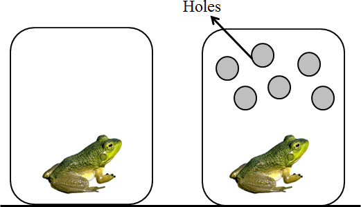This diagram shows the frog in container A and container B