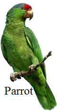 This image of bird is a climbing or not – Choice C