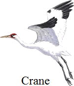 This figure of bird have sharp eyes to see – Choice C
