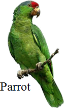 This image shows the bird – Choice D