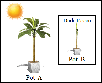 This figure shows the pot A and pot B