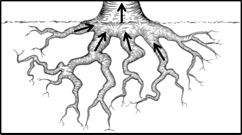 This diagram represent root of tree
