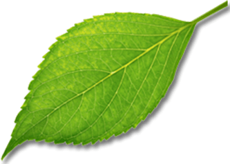 This image show the leaf of plant