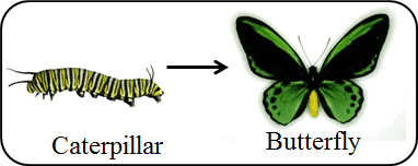 This pair refers caterpillar to butterfly
