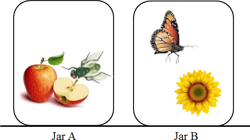 Diagram shows that jar contains fly and jarcontains butterfly
