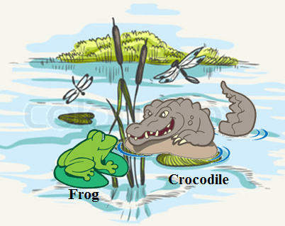 This diagram shows the frog and crocodile