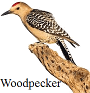 This bird has pointed or long beaks or not – Choice D