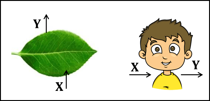 Diagram shows living things of leaf and child