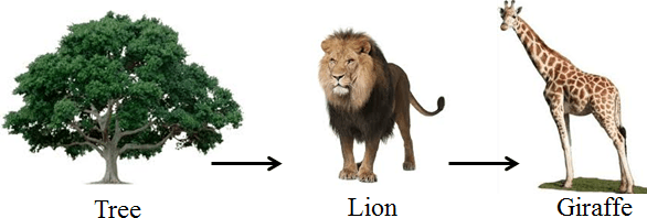 This diagram represents the food chain – Choice D
