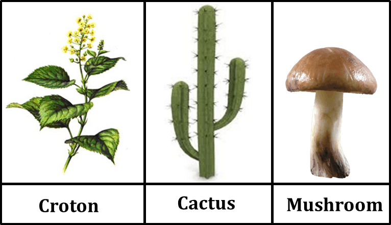 Figure shows the different kinds of plants