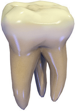 Image shows the one tooth