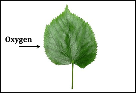 Image shows the process of the plants