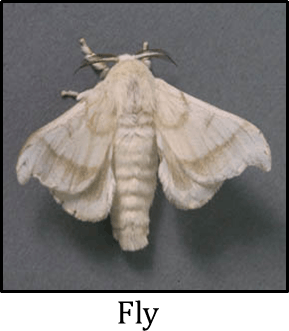 Image shows silkworm stages of its life cycle – Choice D