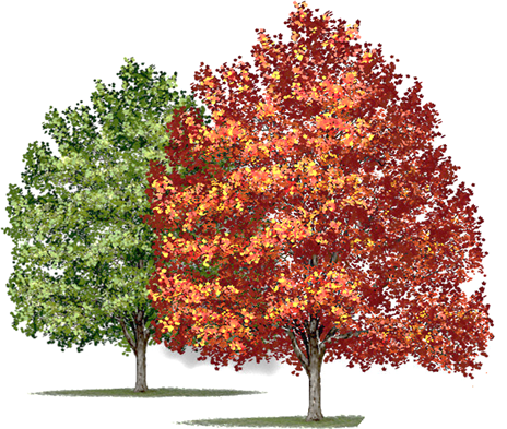This image shows the two tree