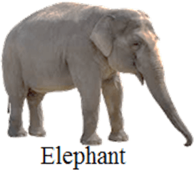 Shows the different types of animal that survive – Choice C