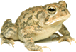 Image showing the frog