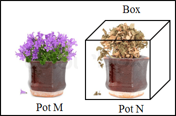 In this diagram shows the two plant pot M and pot N
