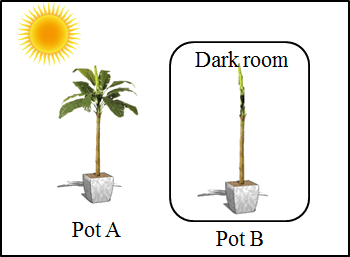 This diagram shows the two plants are planted