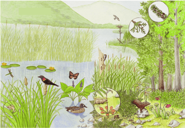 This image shows the water area in plants and animals