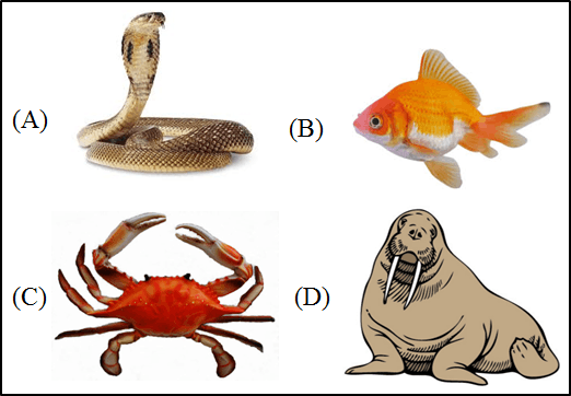 This image shows the four different animals are given