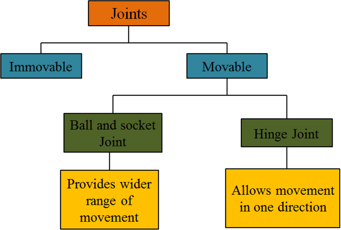 This table shows the types of joints founds in the human body