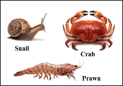 This figure shows the animals given below are similar