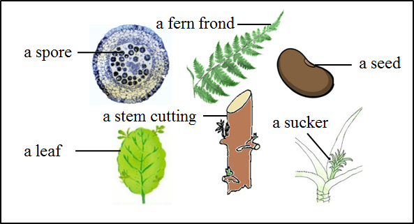 The figure shows the parts of different plants