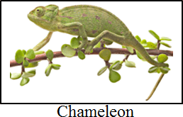Image shows the animals have structural adaptations – Choice C