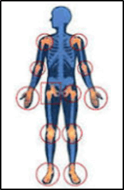 This figure shows the skeletal system of human body