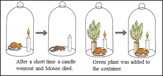 This diagram shows the experiments with candle, mouse and plant