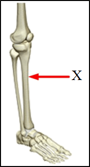 This diagram shows the skeleton part of human body