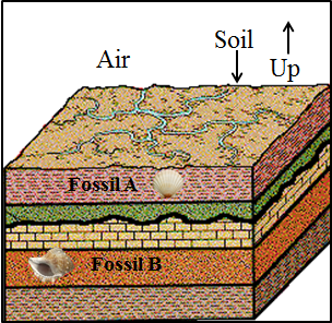This diagram shows the layers of fossils