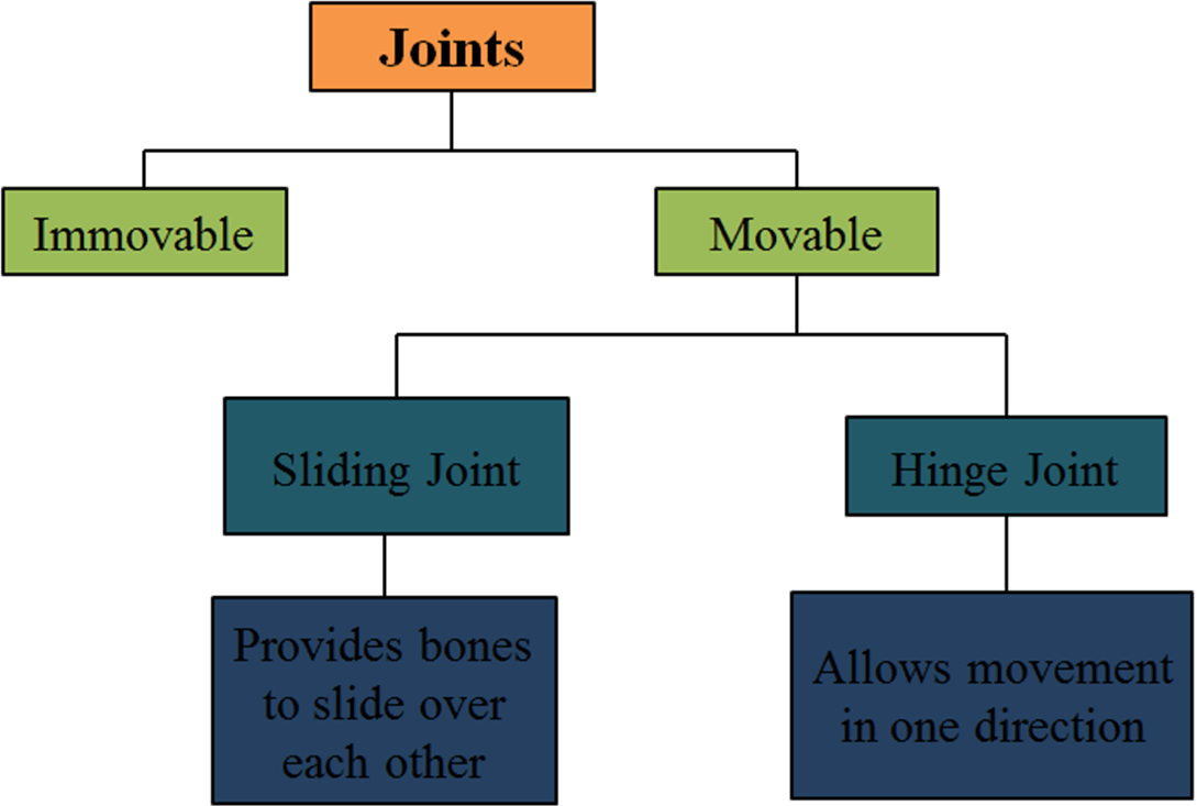 Table represent the types of joints founds in the human body