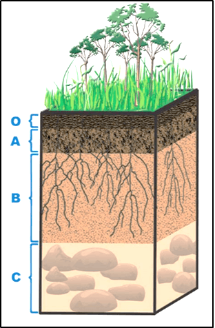 The diagram shows the different layers of a soil