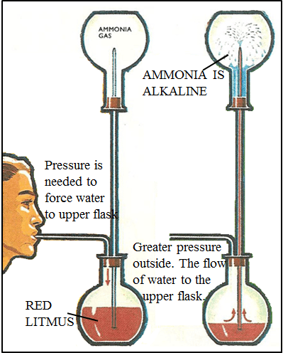 This diagram shows the experiment with red litmus