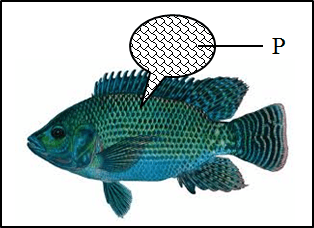 In this figure shows a fish with among part