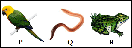 This figure shows the three types of organisms