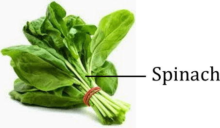 Image shows the edible plant leaves – Choice B