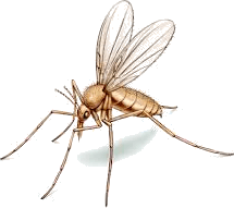 Image of mosquito to this image