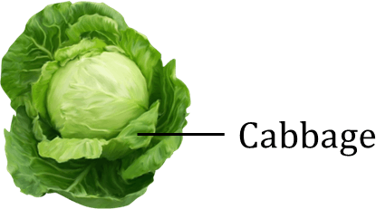 Image shows the edible plant leaves – Choice A