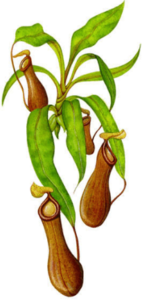 Image shows insectivorous plant or animal – Choice D