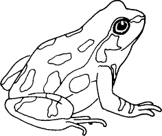 Image of Frog to given this image