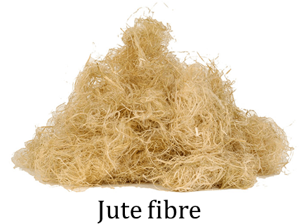Image shows the fibre : Choice B