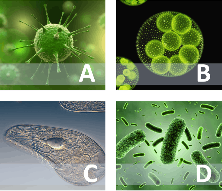 Four types of microorganisms A, B, C and D