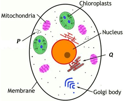 Image of the cell parts