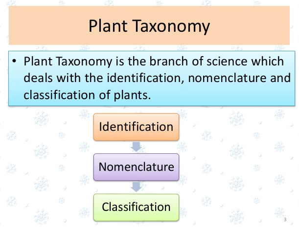 Image showing Plant taxonomy.