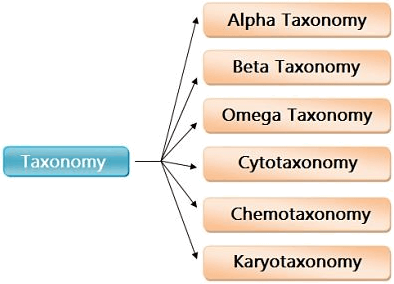 Image showing types of taxonomy.