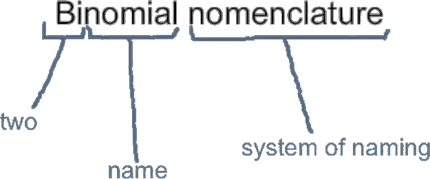 Understanding the meaning of Binomial nomenclature