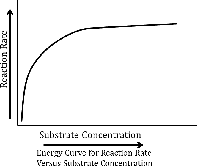The reaction rate versus substrate concentration graph